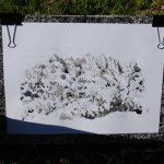 La montana de Montserrat en la segunda fase del proceso_la tinta china